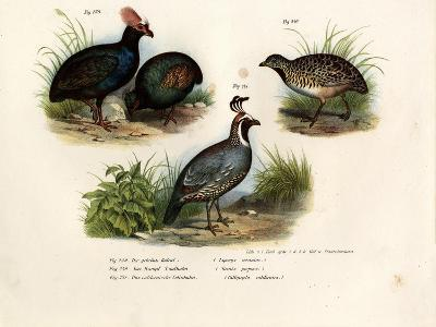 Crested Wood Partridge, 1864--Giclee Print