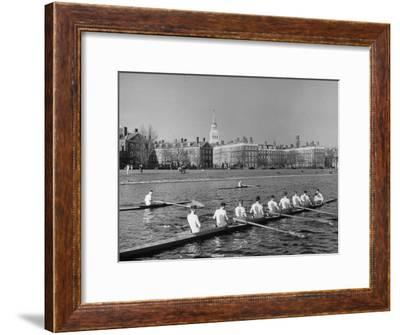 Crew Rowing on Charles River across from Harvard University Campus-Alfred Eisenstaedt-Framed Premium Photographic Print