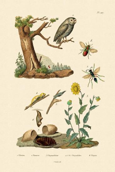 Cricket Hunter Wasp, 1833-39--Giclee Print