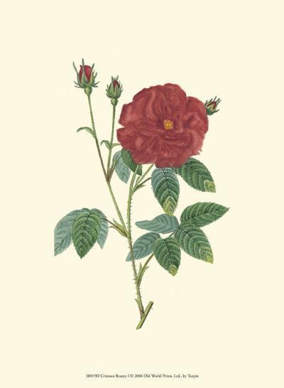 Crimson Beauty I-Turpin-Art Print