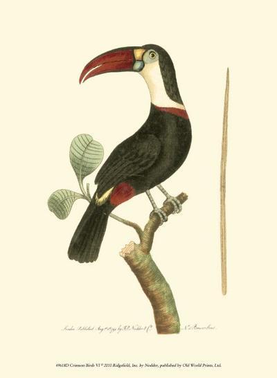 Crimson Birds VI-Frederick P^ Nodder-Art Print