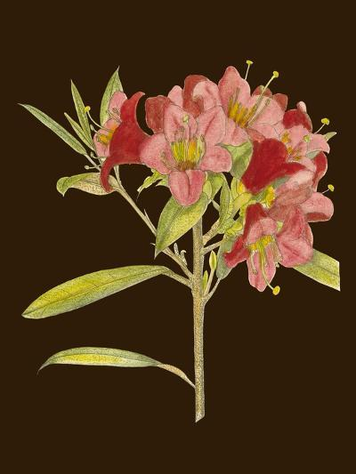 Crimson Blooms IV-Curtis-Art Print
