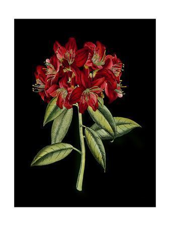 https://imgc.artprintimages.com/img/print/crimson-flowers-on-black-ii_u-l-q11asvc0.jpg?p=0