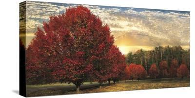 Crimson Trees-Celebrate Life Gallery-Stretched Canvas Print