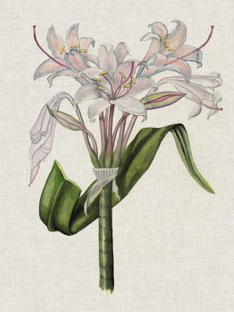 https://imgc.artprintimages.com/img/print/crinium-lily-ii_u-l-q19zi2v0.jpg?p=0