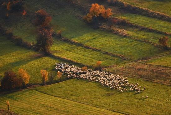 cristian-lee-sheep-herd-at-sunset