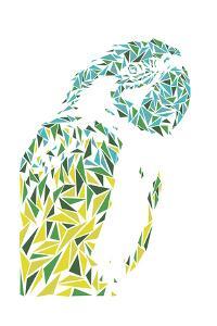 Ara Parrot by Cristian Mielu