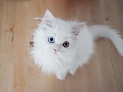 Kitty II