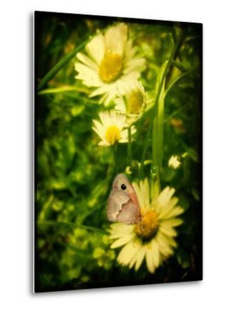 Yellow Flowers with a Butterfly