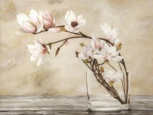 Fiori di magnolia by Cristina Mavaracchio