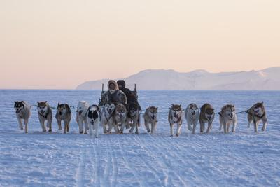 Inuit Hunters and Dog Sled Team on the Sea Ice
