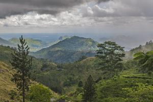 Sinharaja Forest Reserve, a UNESCO World Heritage Site by Cristina Mittermeier