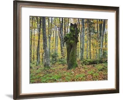 Croatia, Plitvice Lakes National Park, Wood, Trunk-Rainer Mirau-Framed Photographic Print
