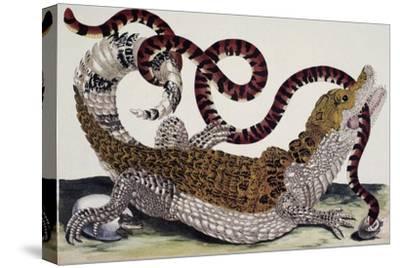 Crocodile and Snake-Maria Sibylla Merian-Stretched Canvas Print