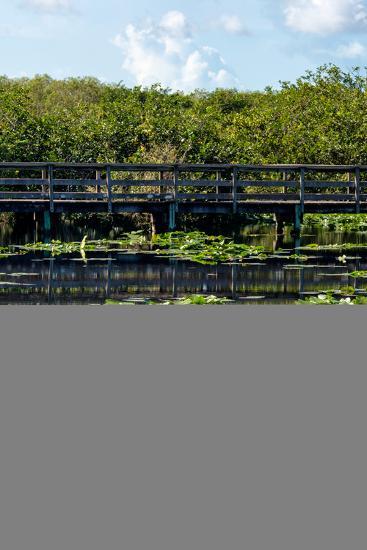 Crocodile - Everglades National Park - Unesco World Heritage Site - Florida - USA-Philippe Hugonnard-Photographic Print