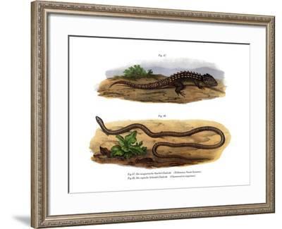 Crocodile Skink--Framed Giclee Print