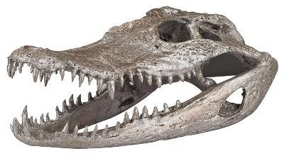 Crocodile Skull In Silver Leaf--Home Accessories