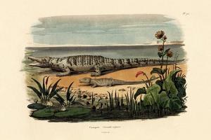 Crocodiles, 1833-39