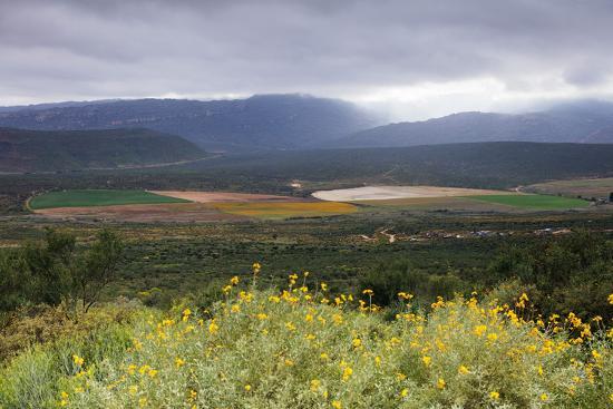Crop circles, Cederberg Wilderness Area, Western Cape, South Africa, Africa-Christian Kober-Photographic Print