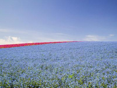 https://imgc.artprintimages.com/img/print/crop-of-flax-on-hillside-in-rows-willamette-valley-oregon-usa_u-l-p83pp30.jpg?p=0