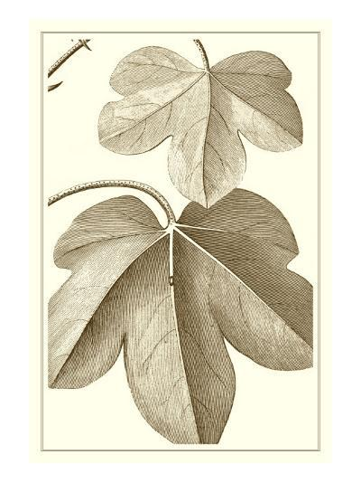 Cropped Sepia Botanical III-Vision Studio-Art Print