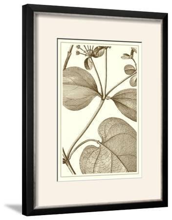 Cropped Sepia Botanical V--Framed Photographic Print