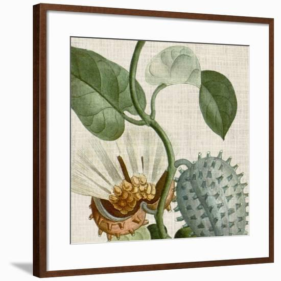 Cropped Turpin Tropicals II-Vision Studio-Framed Art Print