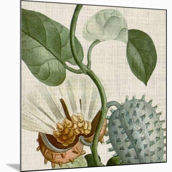 Cropped Turpin Tropicals II-Vision Studio-Mounted Art Print