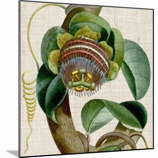 Cropped Turpin Tropicals IV-Vision Studio-Mounted Art Print