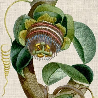 https://imgc.artprintimages.com/img/print/cropped-turpin-tropicals-iv_u-l-q1c4oiz0.jpg?p=0