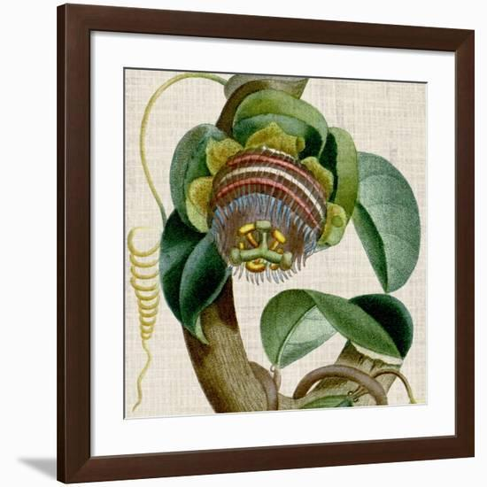 Cropped Turpin Tropicals IV-Vision Studio-Framed Premium Giclee Print
