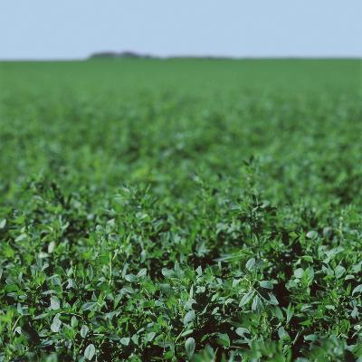 Crops growing in a field--Photographic Print