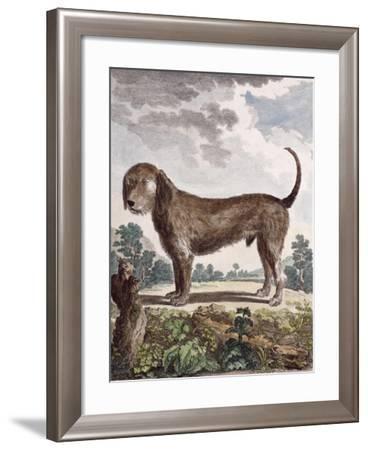 Cross Breed Dog--Framed Giclee Print