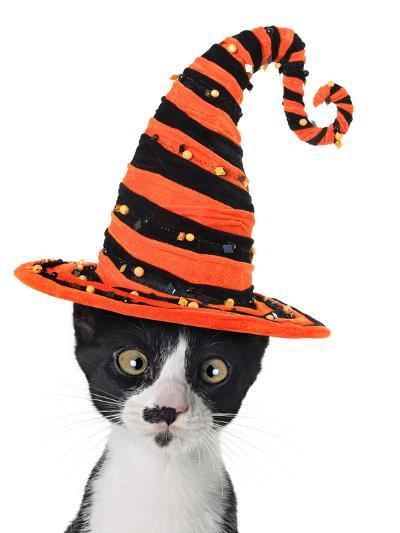 Cross Eyed Kitten Wearing A Halloween Witch Hat-Hannamariah-Photographic Print