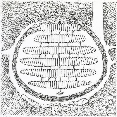 Cross-Section of German Wasp's Nest, Vespidae--Giclee Print