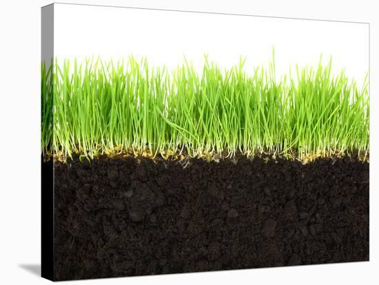 Cross-Section of Soil and Grass Isolated on White Background-viperagp-Stretched Canvas Print