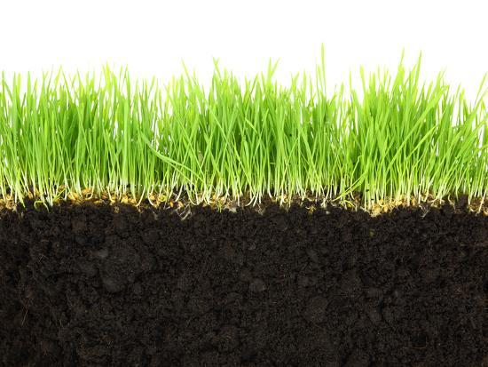 Cross-Section of Soil and Grass Isolated on White Background-viperagp-Photographic Print