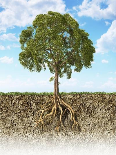 Cross Section of Soil Showing a Tree with its Roots--Art Print