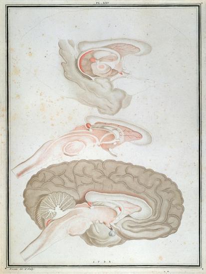 Cross-Section of the Brain, from 'Traite D'Anatomie Et De Physiologie' by Felix Vicq D'Azyr-Alexandre Briceau-Giclee Print