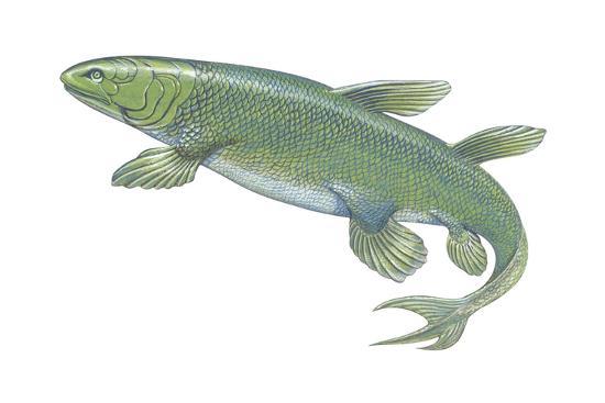 Crossopterygian (Crossopterygii), Fossil, Fishes-Encyclopaedia Britannica-Art Print