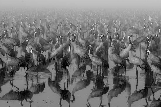 Crosspoint-Ido Meirovich-Photographic Print