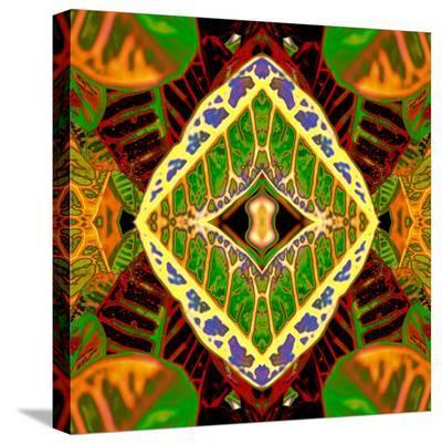 Croton Dashiki-Rose Anne Colavito-Stretched Canvas Print