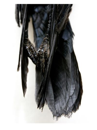 Crow Feet-Judy Tuwaletstiwa-Premium Giclee Print