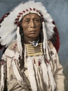 Crow Indian Chief in a Traditional War Bonnet and Clothing, circa 1900