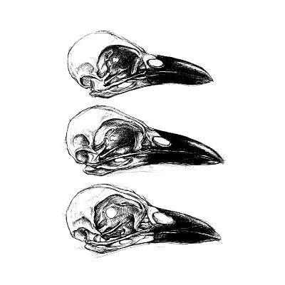 Crow Skull-13UG13th-Art Print
