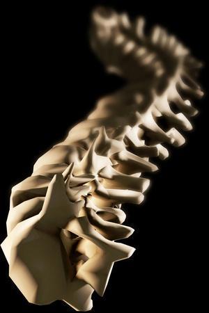 Spine, Artwork