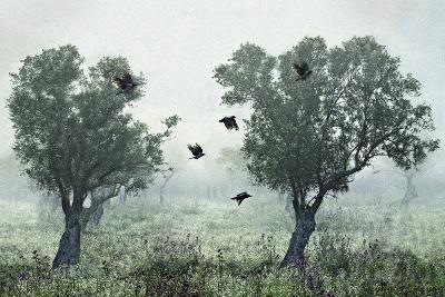Crows in the Mist-S. Amer-Photographic Print