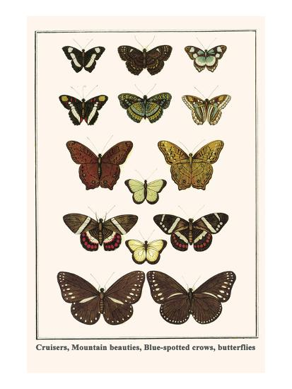 Cruisers, Mountain Beauties, Blue-Spotted Crows, Butterflies-Albertus Seba-Art Print