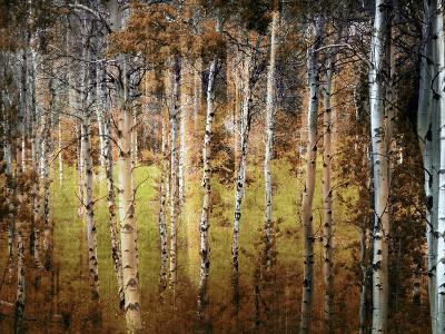 Crunchy-Ursula Abresch-Photographic Print