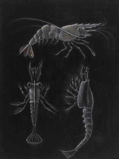 Crustacea-Philip Henry Gosse-Giclee Print